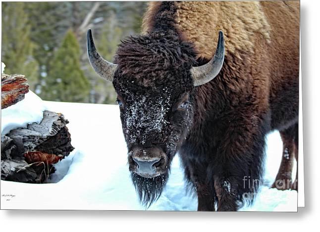 Yellowstone Buffalo Stare-down Greeting Card