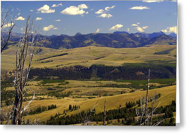 Yellowstone Landscape 2 Greeting Card by Marty Koch