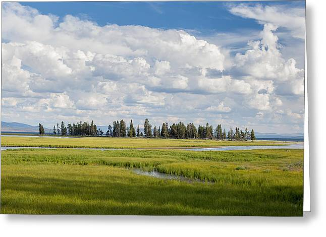Yellowstone Meadow Greeting Card