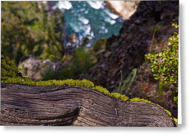 Yellowstone Moss Greeting Card by Patrick  Flynn