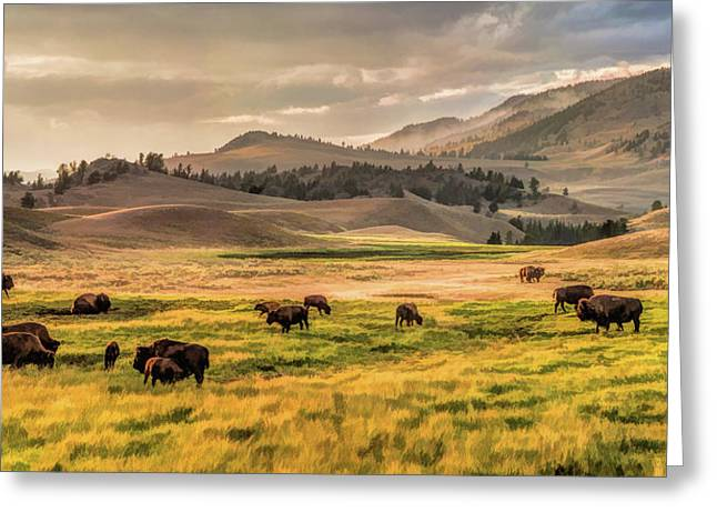 Yellowstone National Park Lamar Valley Bison Grazing Greeting Card