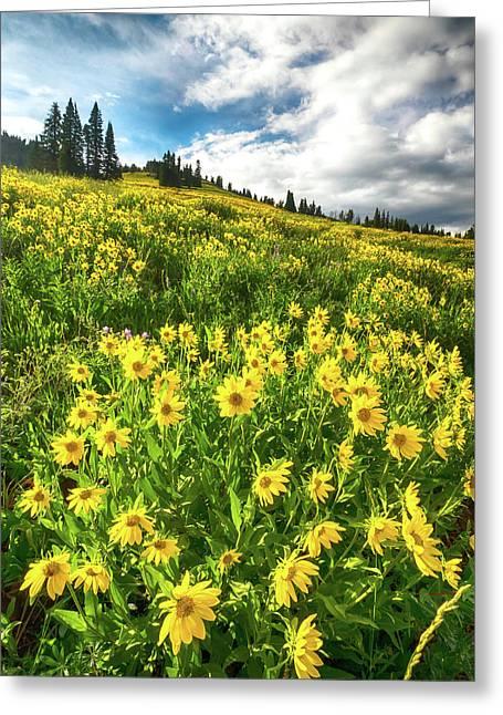 Yellowstone Yellow Greeting Card