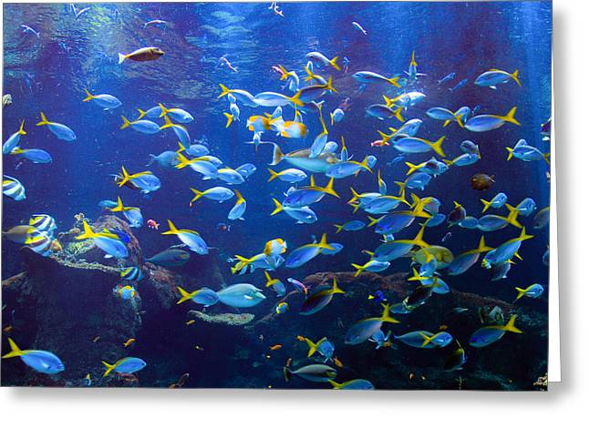 Yellowtail Fusilier Schooling Greeting Card