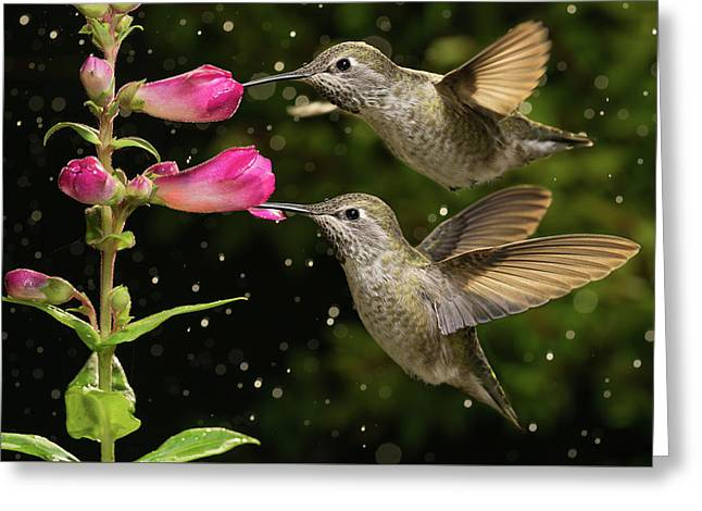 Greeting Card featuring the photograph Yes We Are Twins by William Lee