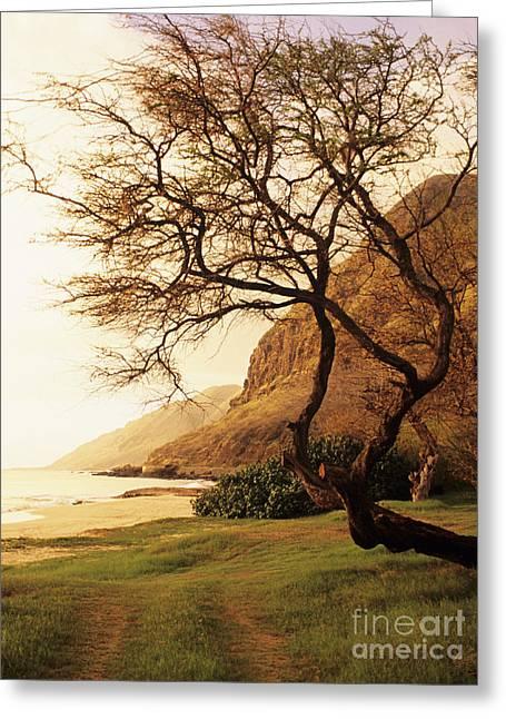 Yokohama Bay Tree Greeting Card by Dana Edmunds - Printscapes