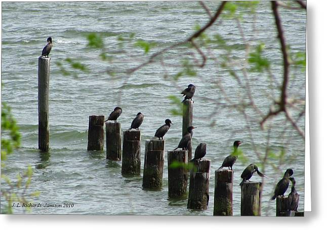 York River Cormorants Greeting Card