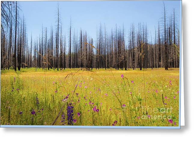 Yosemite Juxtaposition By Michael Tidwell Greeting Card