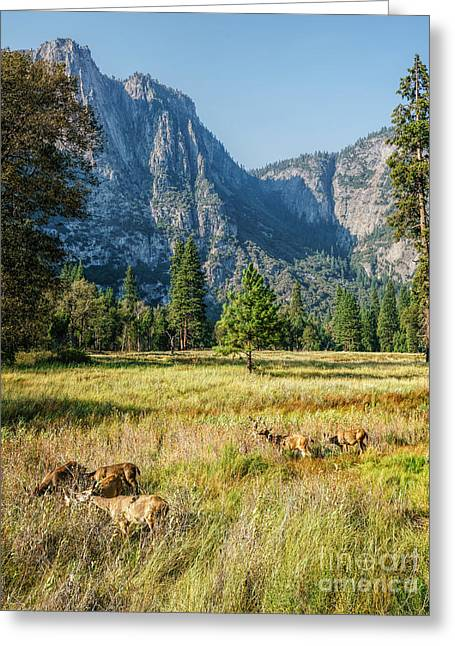 Yosemite Valley At Yosemite National Park Greeting Card