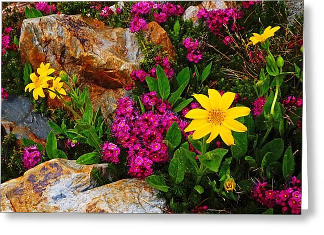 Yosemite Wildflowers Greeting Card