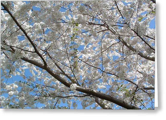 Yoshino Cherry Blossoms Greeting Card