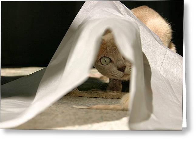 Tonkinese Cat Greeting Cards - Yotsu Greeting Card by Kristin Elmquist