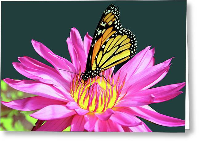 You Are My Monarch Greeting Card by Debra Orlean