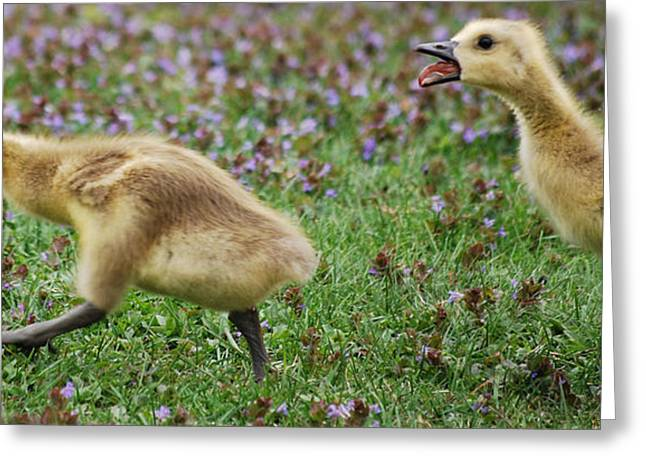 You Better Run.... The Gosling Series  Greeting Card by Michelle  BarlondSmith