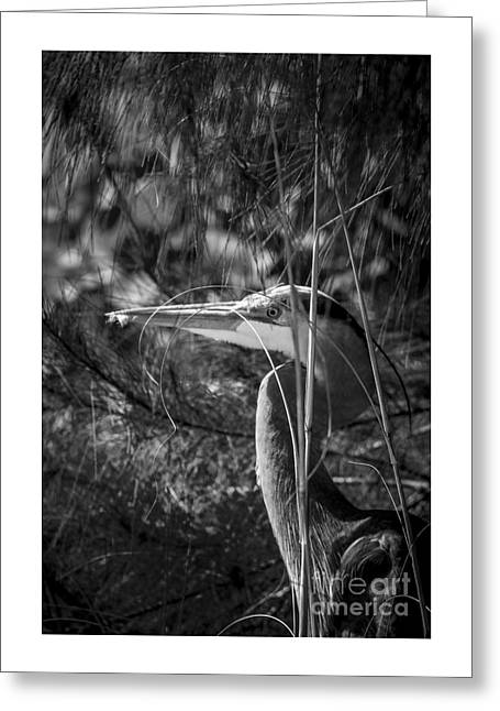 You Can't See Me-bw Greeting Card by Marvin Spates