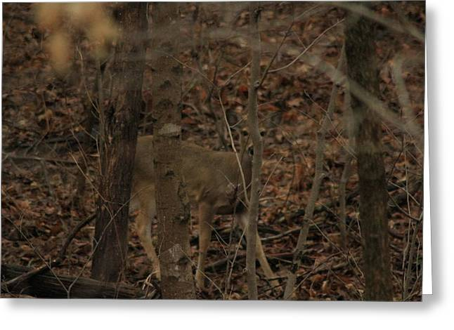 I See You  Greeting Card by Charles Cook