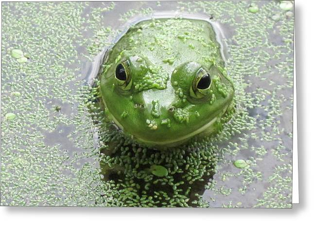 Kermit the frog greeting cards page 2 of 3 fine art america you look good in green greeting card m4hsunfo