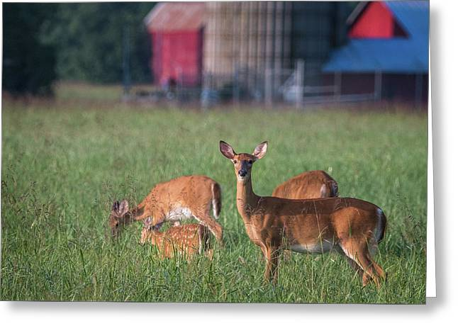 Greeting Card featuring the photograph You Lookin' At Me? by Cindy Lark Hartman