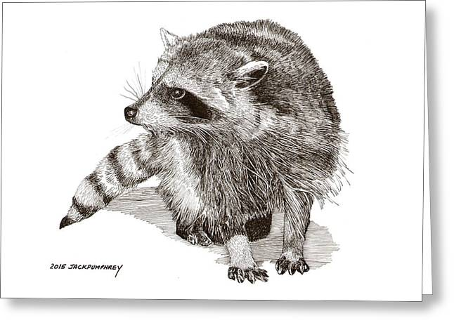 You Looking At M E  Randy Raccoon Greeting Card by Jack Pumphrey