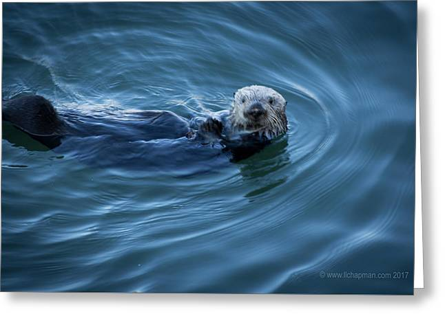 You Otter Take My Picture, Lady Greeting Card by Lora Lee Chapman