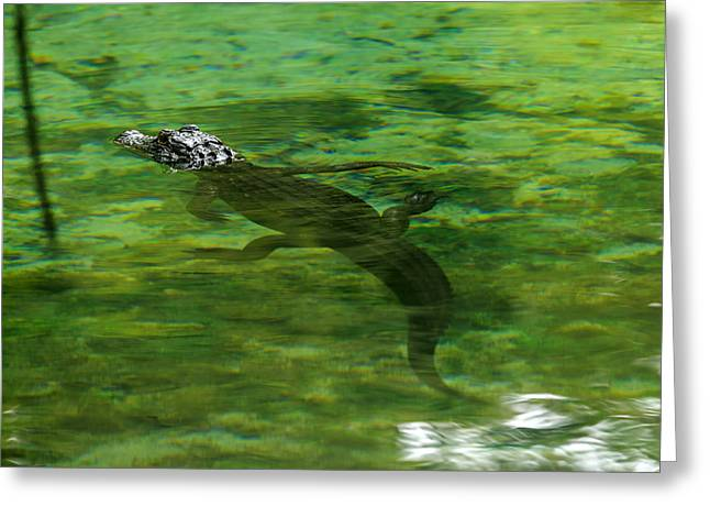 Young Alligator Greeting Card by Travis Rogers