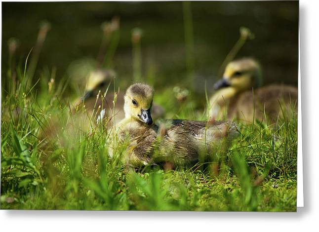 Greeting Card featuring the photograph Young And Adorable by Karol Livote