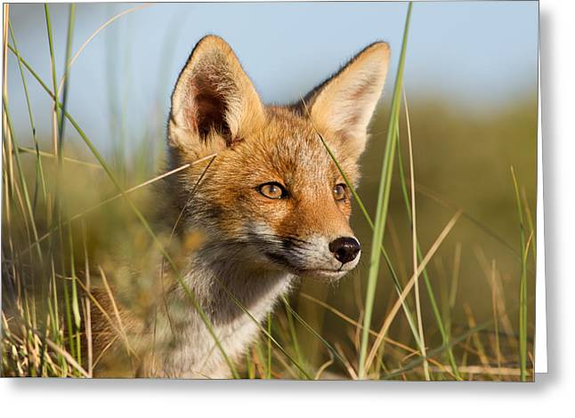 Young And Eager - Red Fox Kit Greeting Card