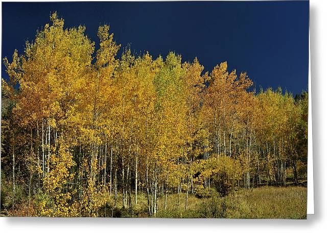 Young Aspen Family Greeting Card