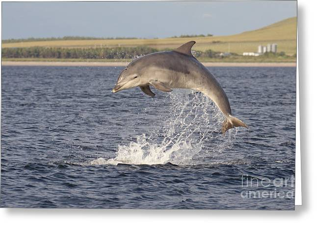Young Bottlenose Dolphin - Scotland #13 Greeting Card