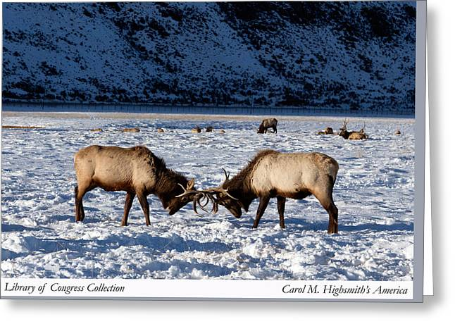 Greeting Card featuring the photograph Young Bull Elk In Jackson  Hole In Wyoming by Carol M Highsmith