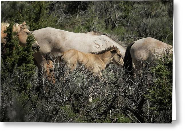Young But Keeping Up Greeting Card by Belinda Greb