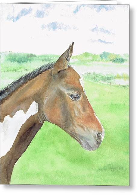 Young Cob Greeting Card