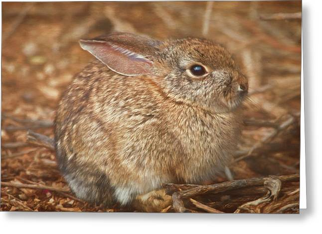 Young Cottontail In The Morning Greeting Card