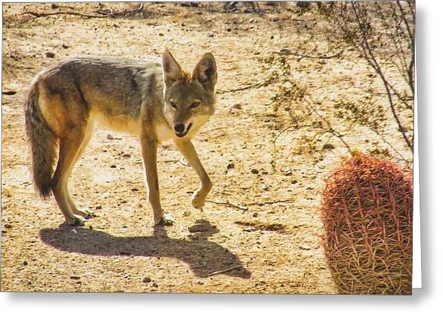 Young Coyote And Cactus Greeting Card
