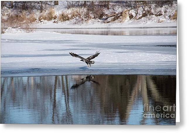 Young Eagle Reflection And Shadow Greeting Card by David Bearden