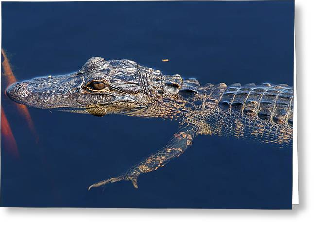 Young Gator 1 Greeting Card