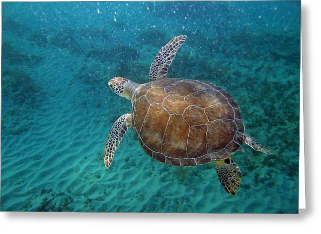 Young Green Turtle Greeting Card by Kimberly Mohlenhoff