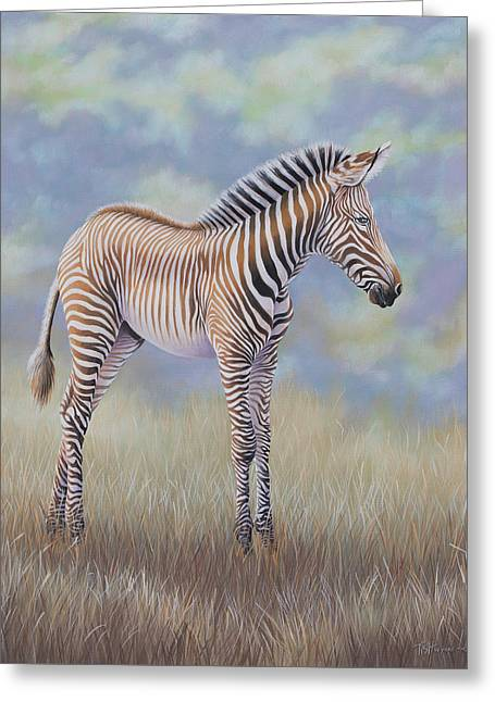 Young Grevy Zebra Greeting Card