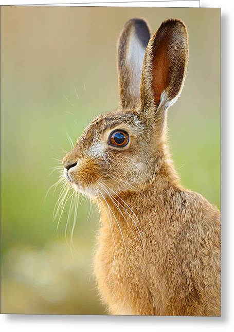 Young Hare Portrait Greeting Card