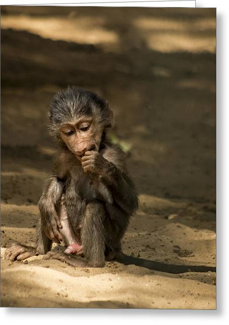 Young Monkey Greeting Card by Paulo Goncalves
