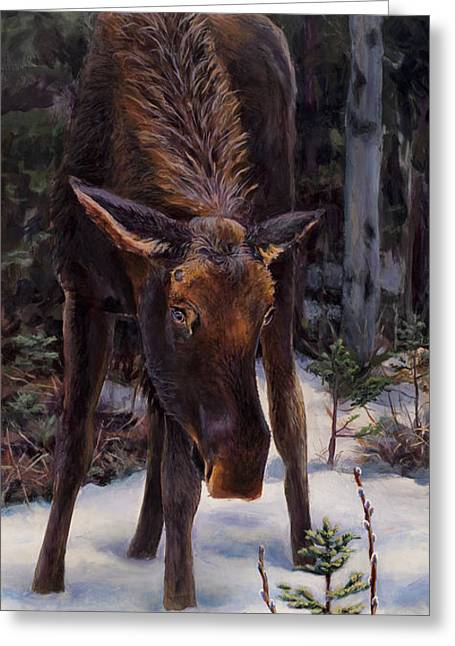 Young Moose And Snowy Forest Springtime In Alaska Wildlife Home Decor Painting Greeting Card