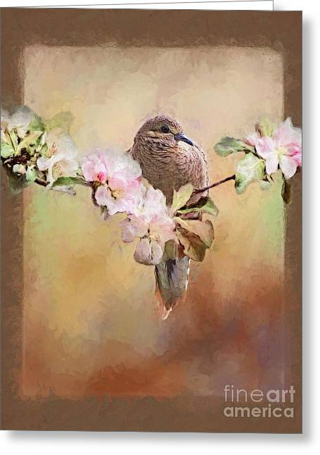 Young Morning Dove Greeting Card by Suzanne Handel