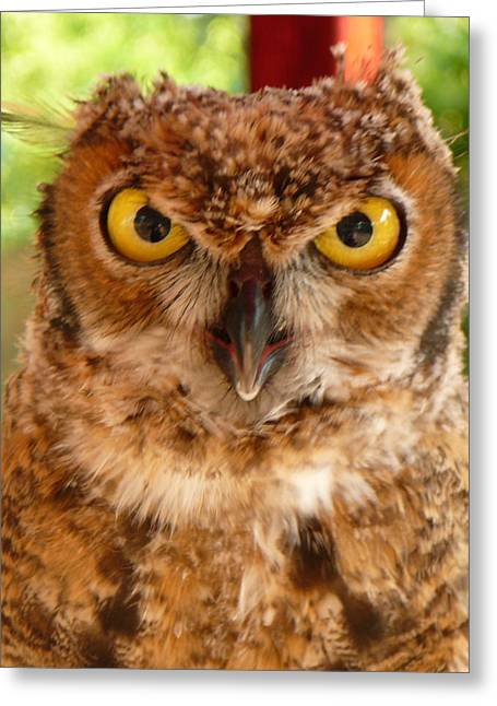 Young Owl Greeting Card by Jan Bennicoff