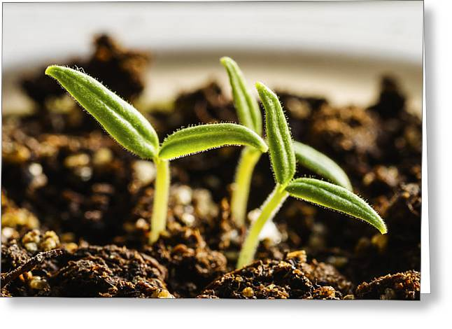 Young Plants Or New Life Greeting Card by Vishwanath Bhat