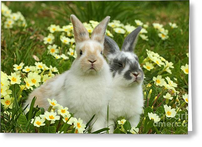 Young Rabbits Greeting Card by Mark Taylor