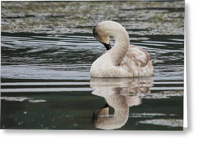 Young Reflection  Greeting Card