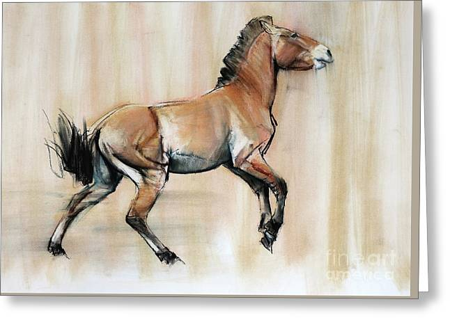 Young Stallion Greeting Card by Mark Adlington