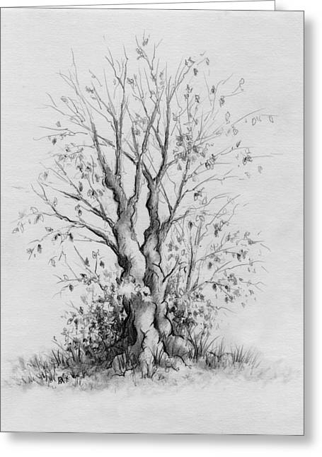 Young Tree Greeting Card