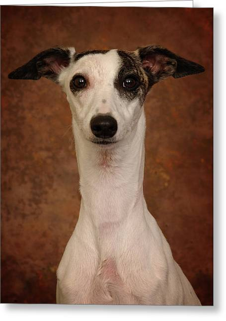 Greeting Card featuring the photograph Young Whippet by Greg Mimbs