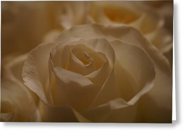 Your Beauty Stands Out Greeting Card by Ernie Echols