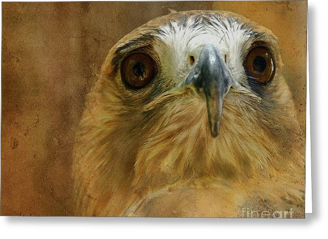 Red Tail Hawk Digital Art Greeting Cards - Your Majesty Greeting Card by Lois Bryan